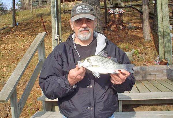 Large white bass