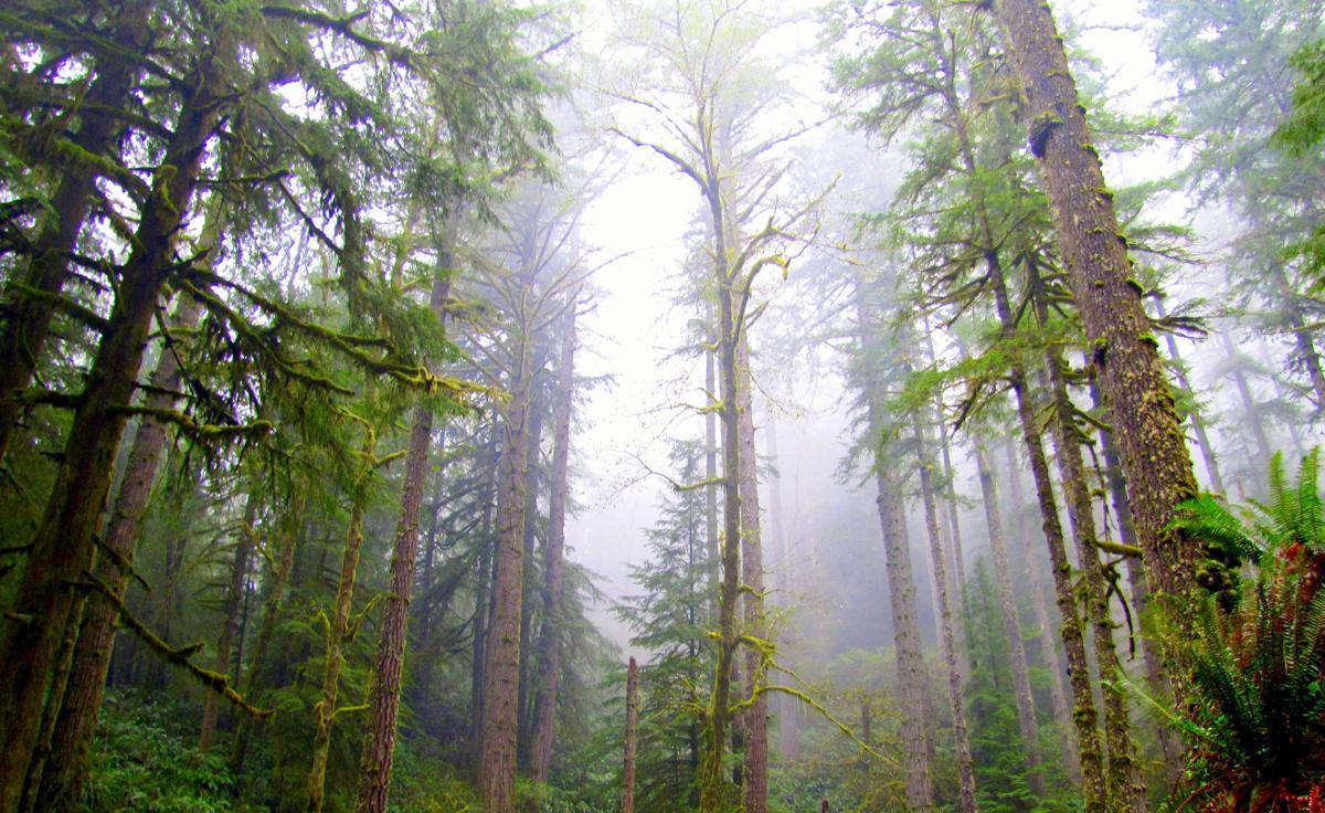Elliott Forest sale moves forward over Brown's objection