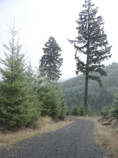 Judge reverses key ruling in $1.4 billion timber class action