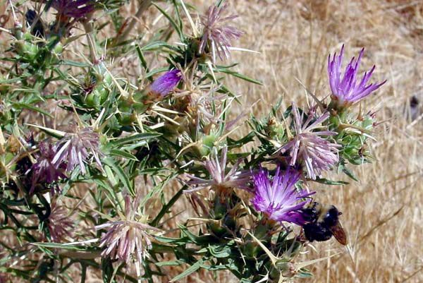 The county's most wanted noxious weeds