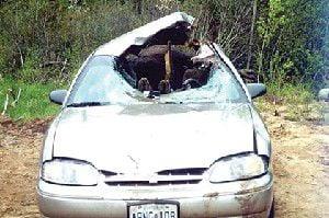Moose arrive in Oregon