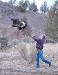 Dayville Golden eagle survives car crash