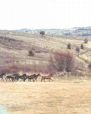 Murderers Creek wild horse plan