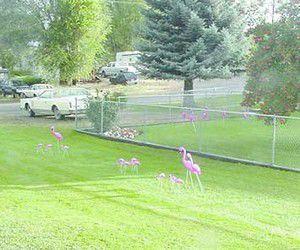 Flamingos take up residence in Prairie City