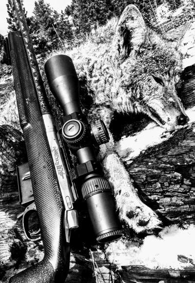 Shooting the Breeze Predator hunting