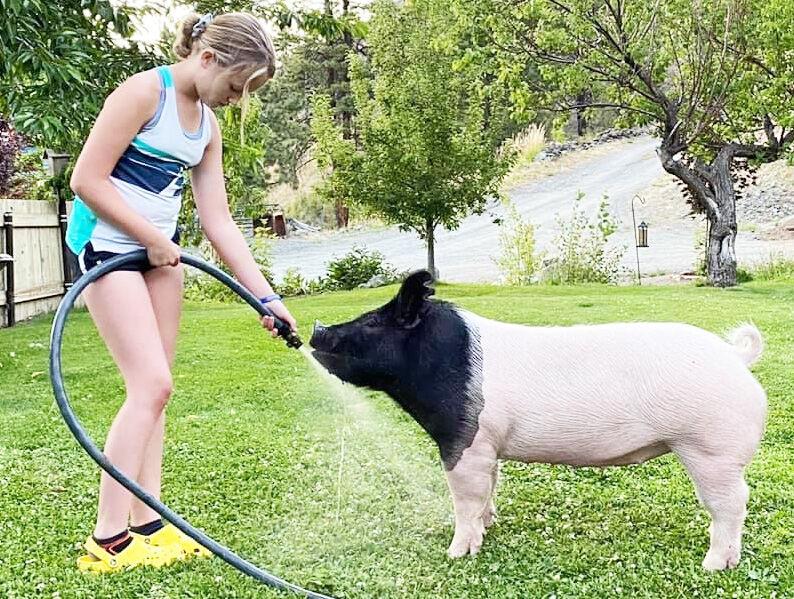 Brooke washing pig
