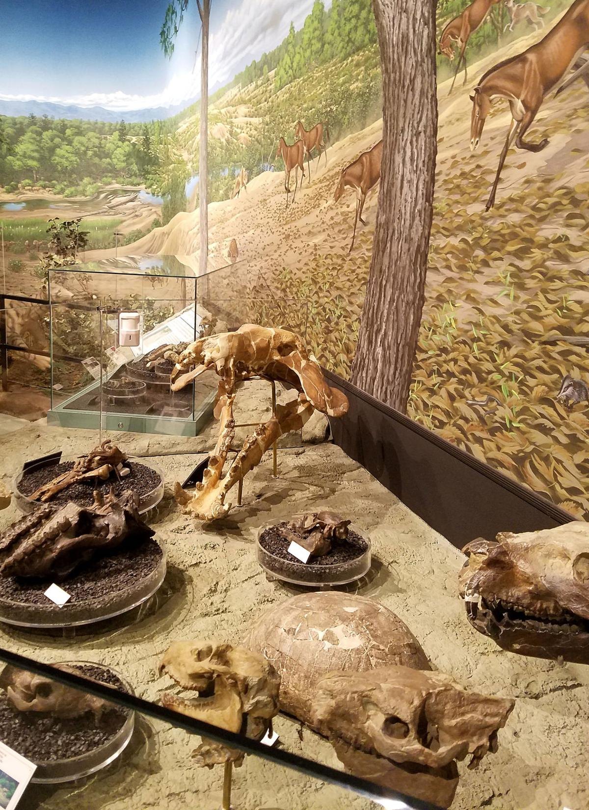 Hundreds of fossils on display at state-of-the-art museum