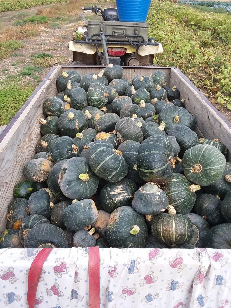 Abundant amount of produce