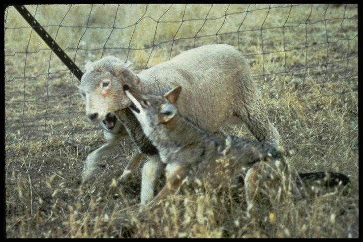 Predator control returns to Grant County