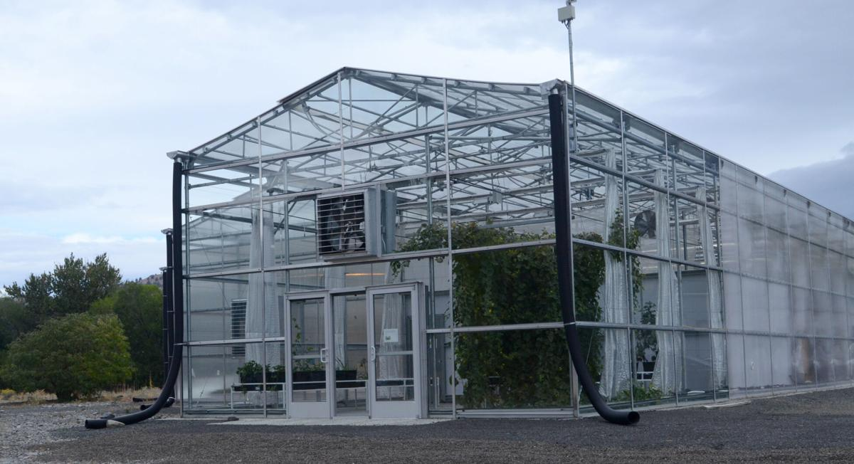 Greenhouse on Sept. 25