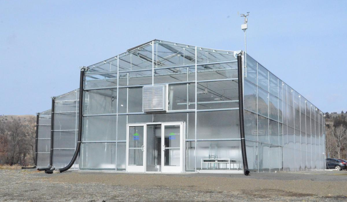 Greenhouse stands tall