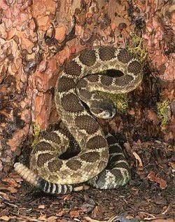 I brake for rattlesnakes