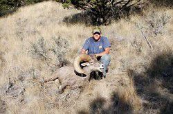 Bighorns bagged locally