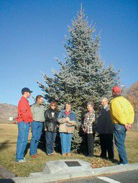 Mt. Vernon City Park officially receives its Christmas tree