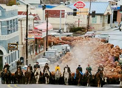The John Day cattle drives