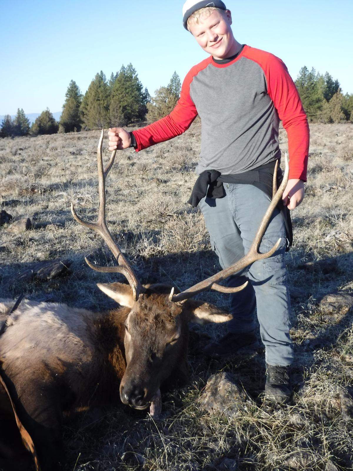 Carpenter elk