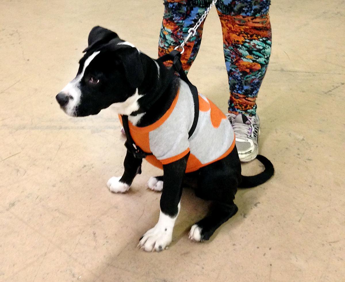 Rescue dog Milo