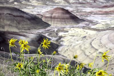 Wildflower hikes planned at Painted Hills on Mother's Day