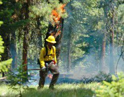 Fire 101: Students tackle fire lines