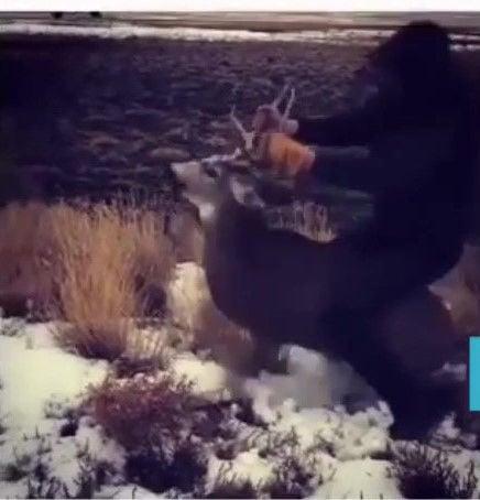Deer abuse