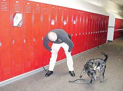 Drug dog sniffs way to school