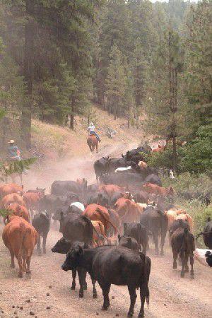 Ranchers win round in grazing battle