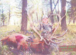 Bull elk kill