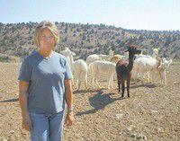 Local alpaca business grows
