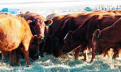 Benefit auction to aid rancher defense fund