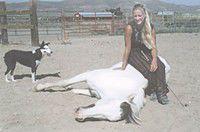 Unity's Horse Whisperer talks to the animals