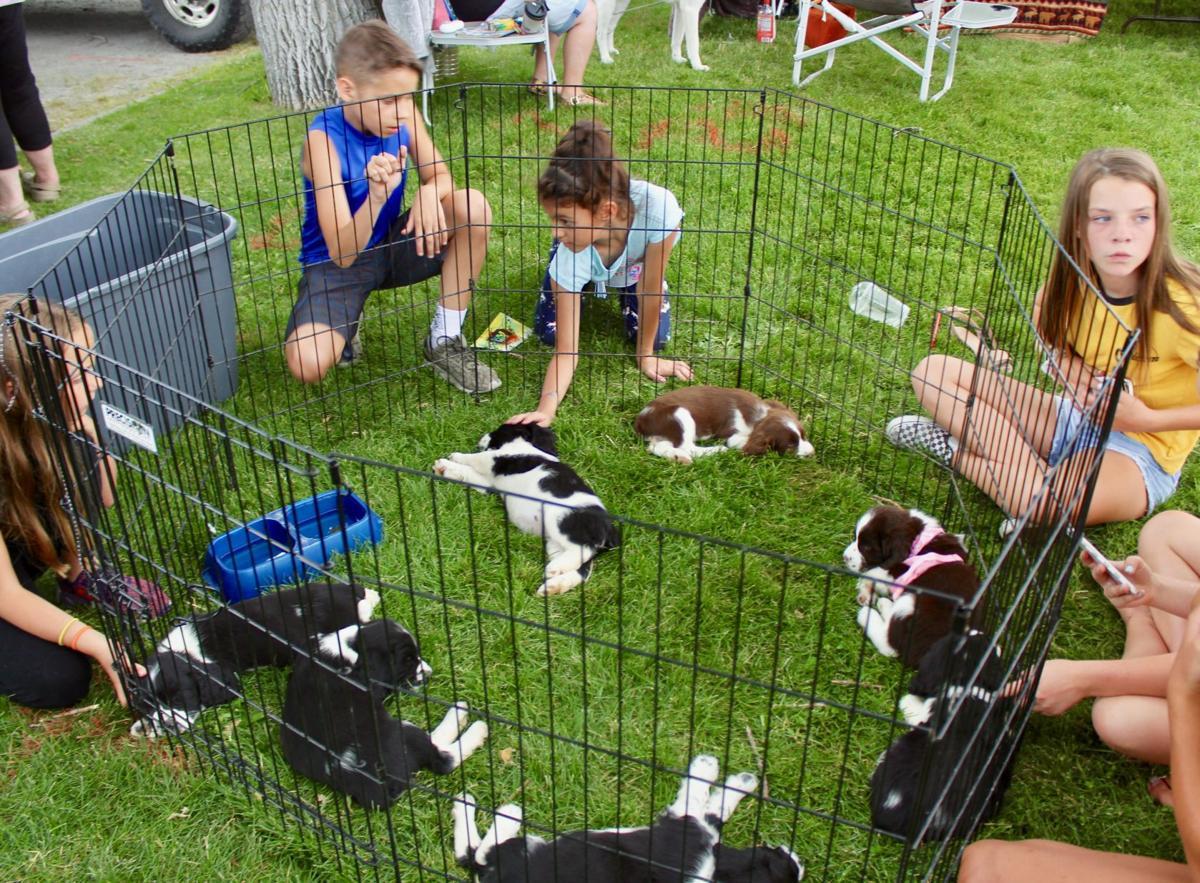 073119 Frontier Days puppies.jpg