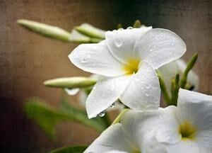 Obit - Flowers.jpg