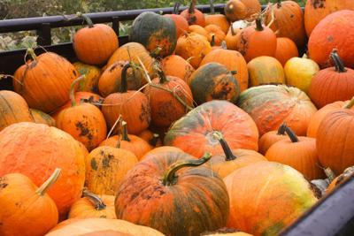 Five fall social distancing activities in Harrisonburg