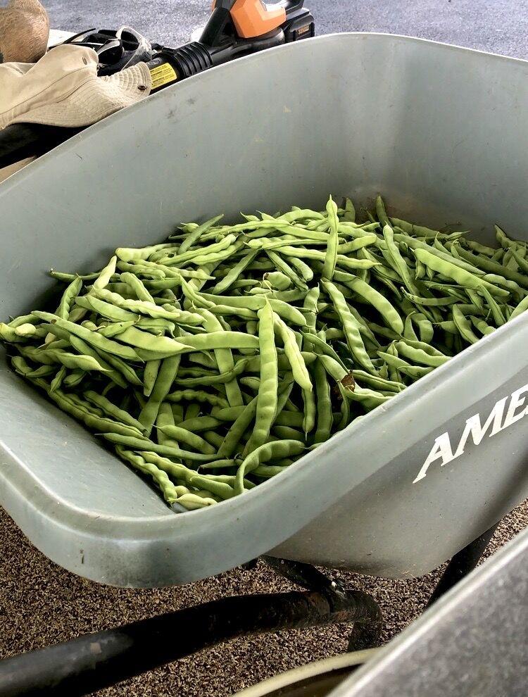 southern heritage - peas.jpeg