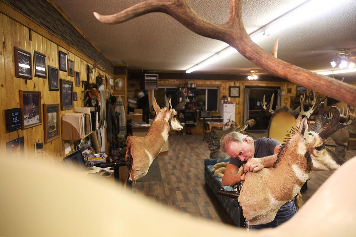 Tim Peterson is the owner of Hawk Creek Taxidermy