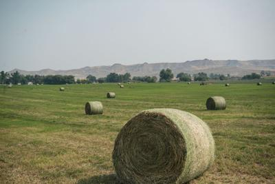 Runoff proves plentiful for producers