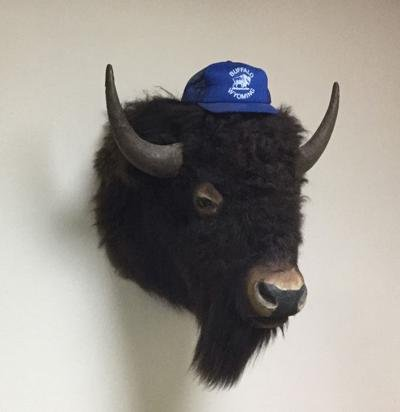 The journey of a buffalo head to the mayor's office...