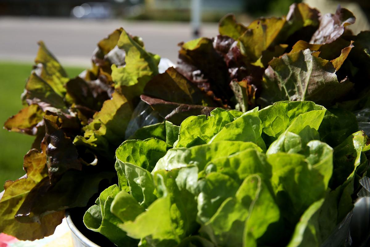 Heads of lettuce were one of several greens available for sale