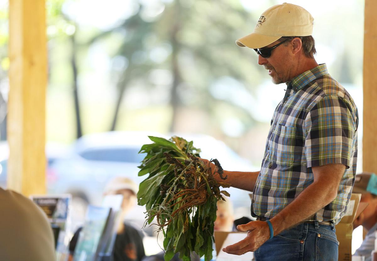 Rod Litzel shows examples of the types of weeds they are pulling