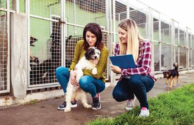 Pets / Foster the animals
