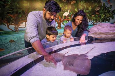 New creatures at the Aquarium of Niagara