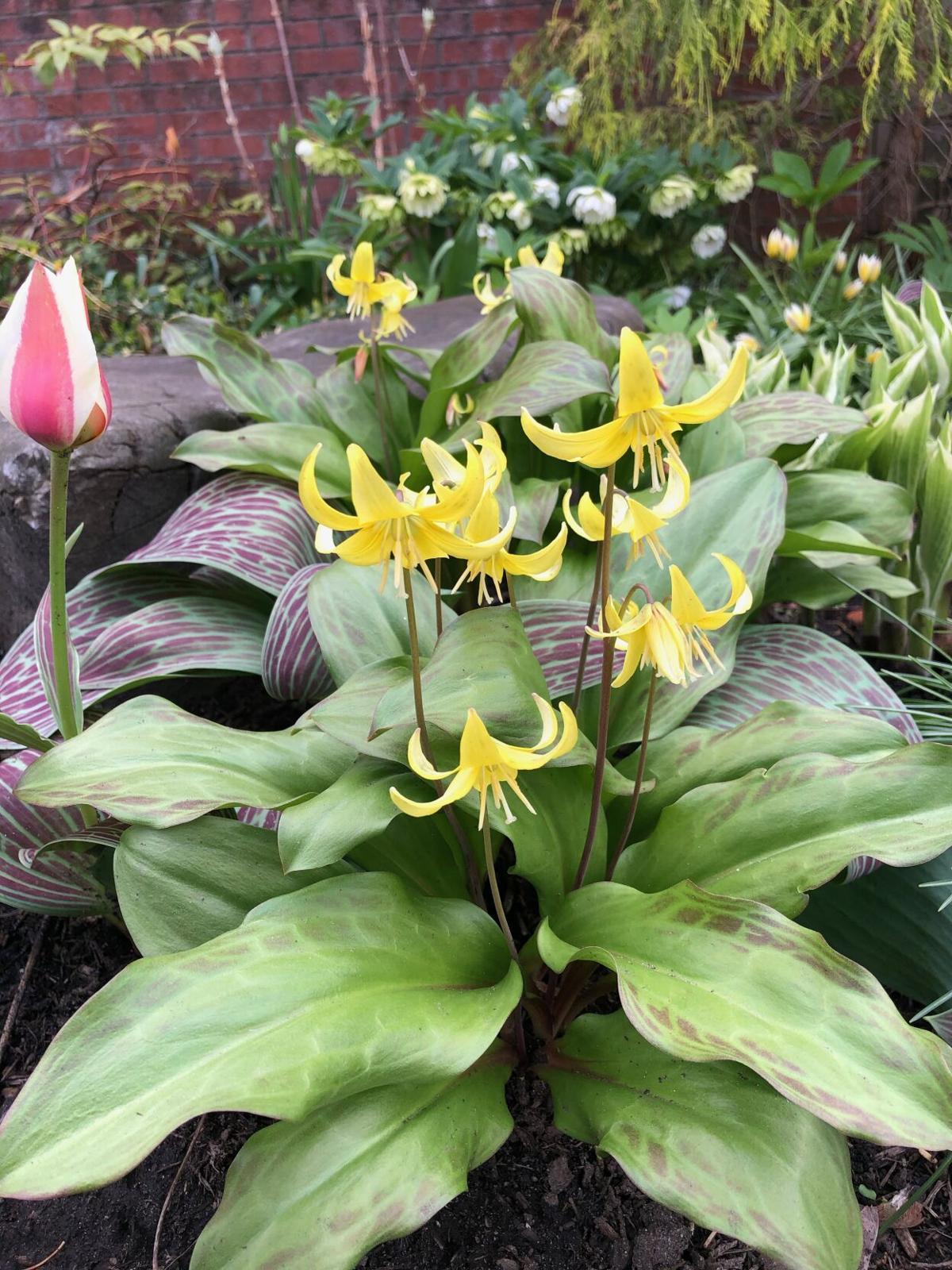 Garden where you're planted, 5/4–11
