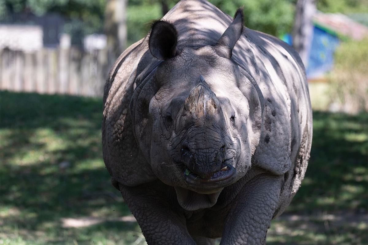 Buffalo-Zoo_StephenGabris15.jpg