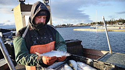 Signs of trouble ahead for Lake Superior's historic lake herring fishery