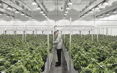 Recreational marijuana: Big business or big mistake?