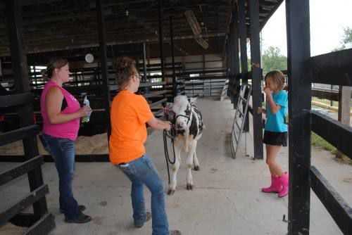 Missaukee Youth Show grows, 4-H seeks more involvement