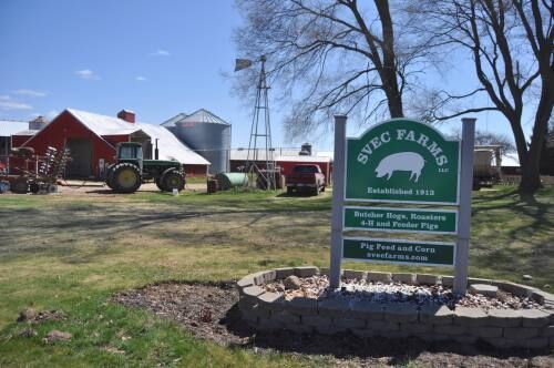 Buckley pig farmers cutting out middleman to survive shifting economic climate