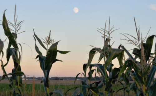 With full moon past, farmers breathing sigh of relief; still have a ways to go