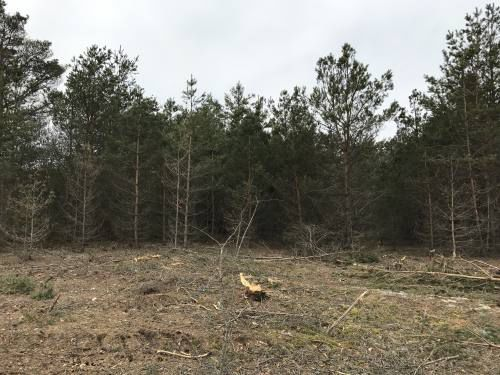 Christmas Tree Farms.What Can You Do With An Old Christmas Tree Farm Community