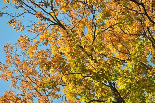 While delayed by warm September temps, fall color starting to appear